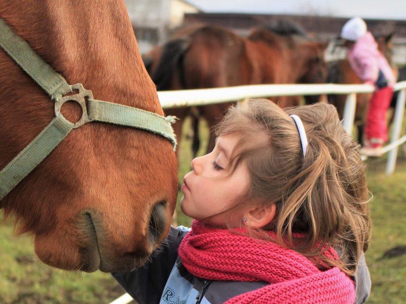 Pferdemarkt